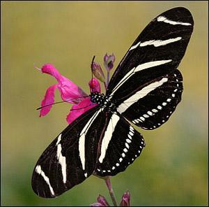 Le labyrinthe obscur et sinueux dans Cancer du rein les-papillons-tropicaux-730331