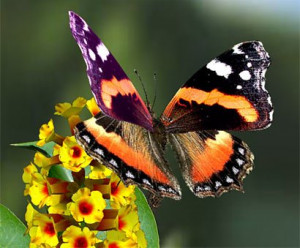 La vie est une tartine de merde dans Cancer du rein papillon-color%C3%A9-32-300x248