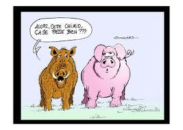 Les cancéreux ont aussi de l'humour dans Cancer du rein cochon-sanglier-chimio