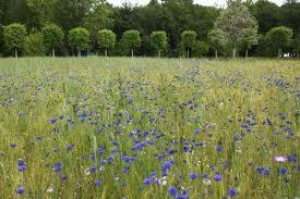 jardin-fleuri-st-germain