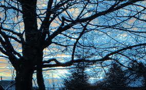 arbre-dhiver dans Cancer du rein