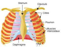 La responsabilité du malade et de ses accompagnants dans Cancer du rein elasticite-du-diaphragme
