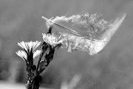 la plume dans le vent